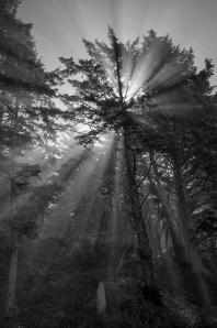 """""""Mornng Fog at Mora"""" - Jude Dippold"""